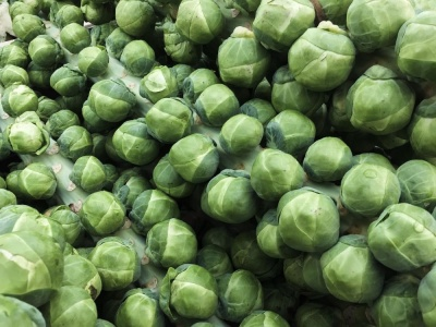 Brussel Sprouts Evesham Special - Seeds