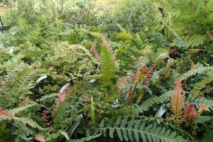Collection of 6 Hardy Ferns