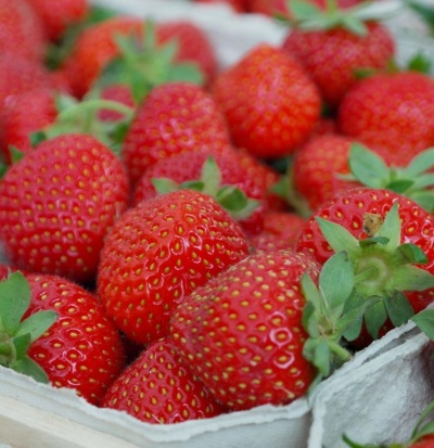 Strawberry 'Hapil'