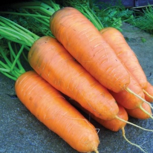 Carrot Katrin Seeds