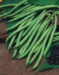 Climbing French Bean Cobra - Seeds