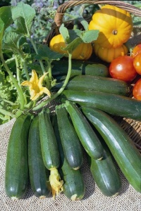 Courgette Nero Di Milano - Seeds